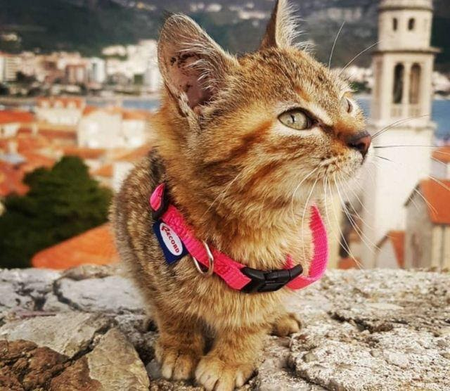 Gusty kitty lying on a rock, with a European city in the background, looks up.