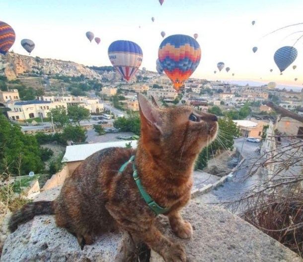 Nala watches hot air balloons flying over the Kelebek Special Cave Hotel in Turkey.