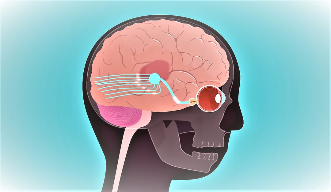 Illustration of the process of vision in the brain. Main image of an article on how the eyes seeץ