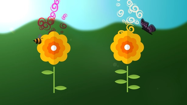 A picture of how flowers use their scent to attract insects and other animals.