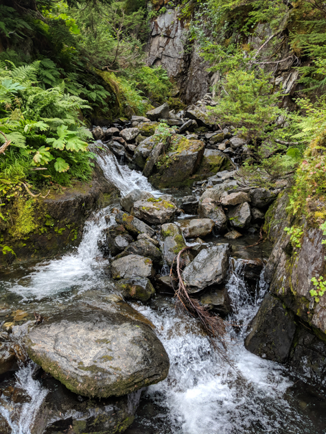 babbling brook in a lush green forest