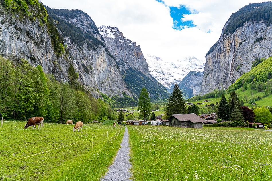 Switzerland cow pasture with mountains in Lauterbrunnen