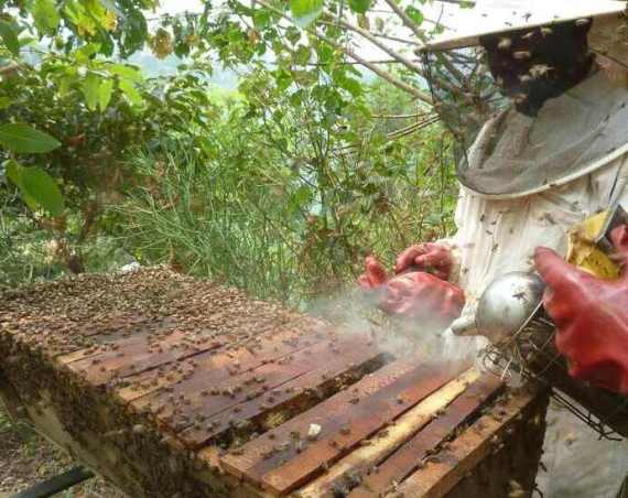 Beekeepers for Life: how a UK-based charity are helping empower women and helping the environment