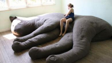 Photo of 10 Really Weird Beds You Might Not be Able to Sleep In