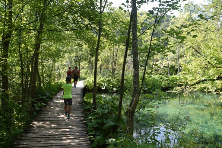 wooden path on the C program in Plitvice Lakes