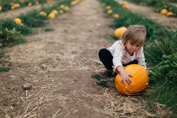 Halloween in London with Kids - Pumpkin patches in London