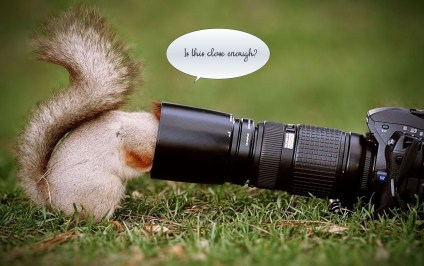 squirrel inside camera lens