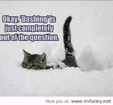 Funny-Snow-Quotes-10