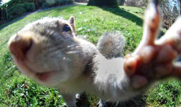 Squirrel-Selfie