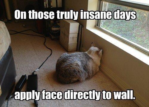cat-humor2