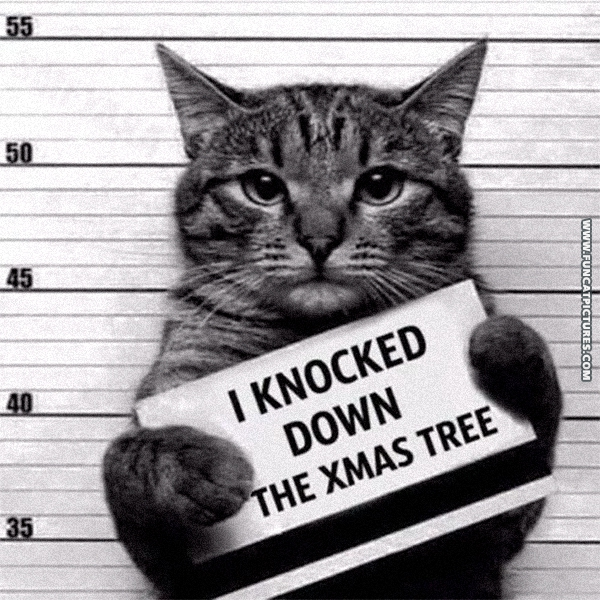 fs-12-23-2016-cat-booked-knocked-down-xmas-tree