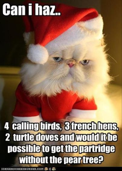 fs-12-9-2016-12-days-of-catmas-song