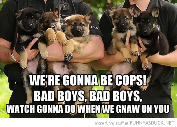 funny-pictures-police-dog-puppies-gonna-be-cops