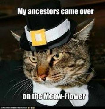 meow-flower