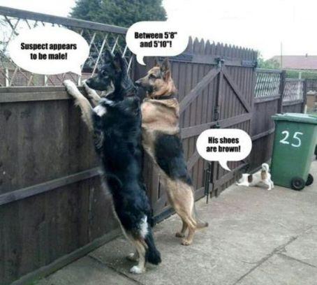 police-dog-humor