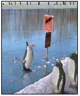 no-diving-penguin