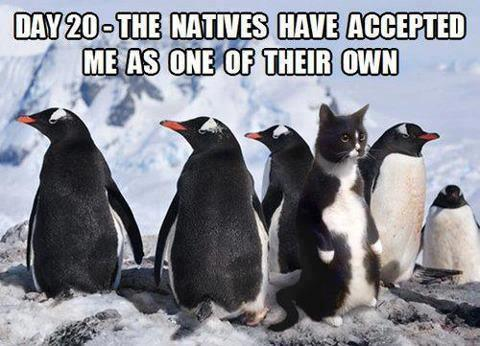 the-natives-have-accepted-me-cat-possing-as-a-penguin