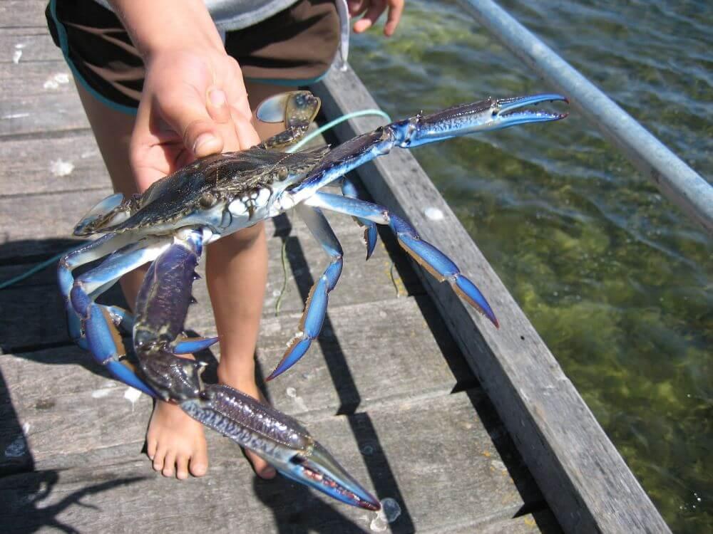 Grab a Crab!!