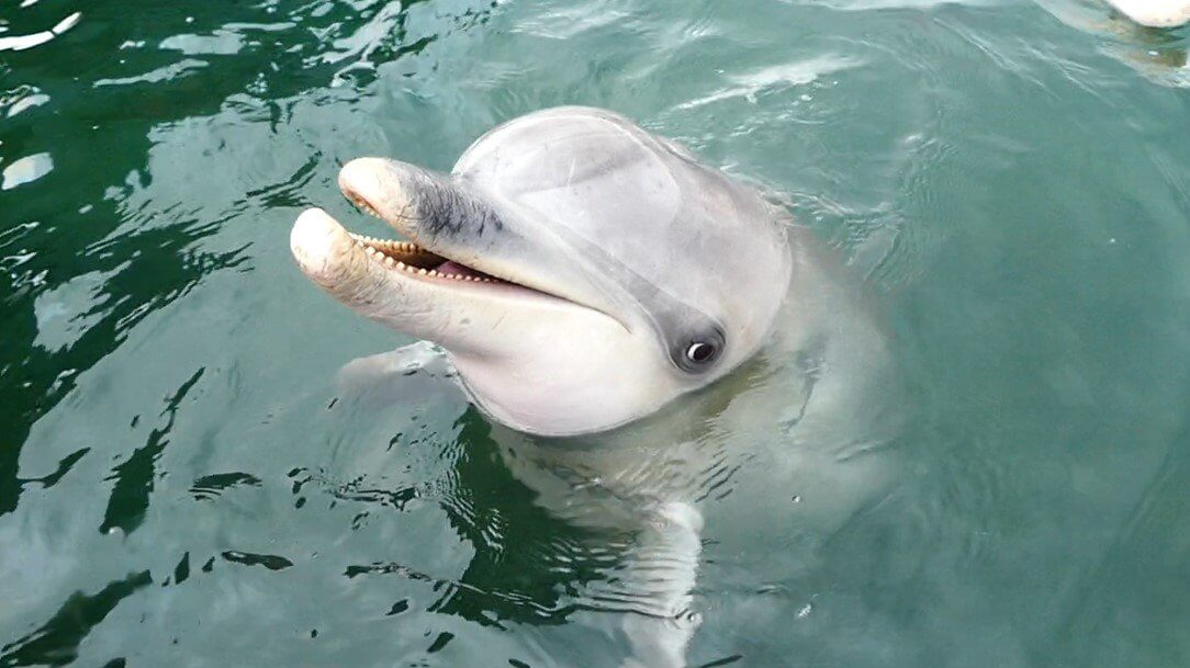 Meet the Whyalla Dolphins