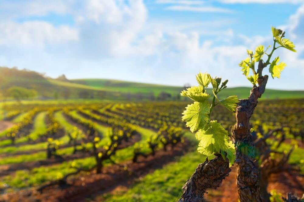 Day trips from Adelaide: Barossa Valley