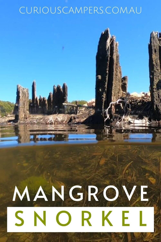 Port Gawler Mangrove Snorkel