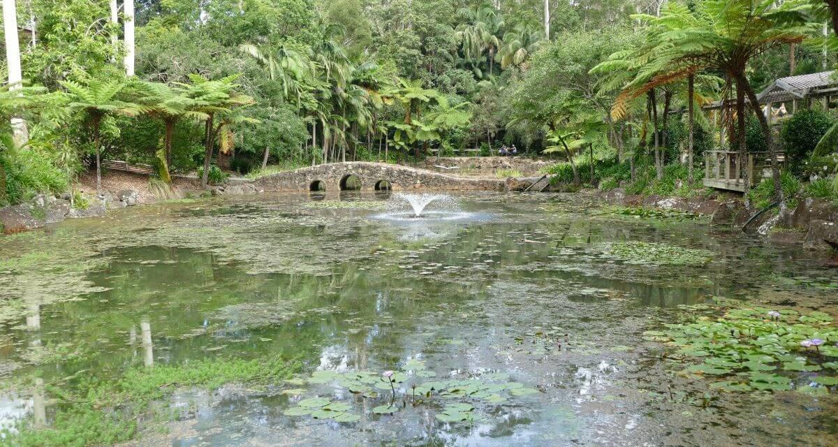 Explore Tamborine Mountain Botanic Gardens