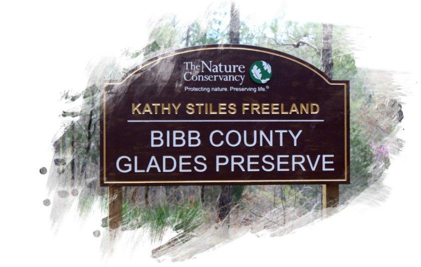 Curious Craig - Bibb-County-Glades-Paint.jpg