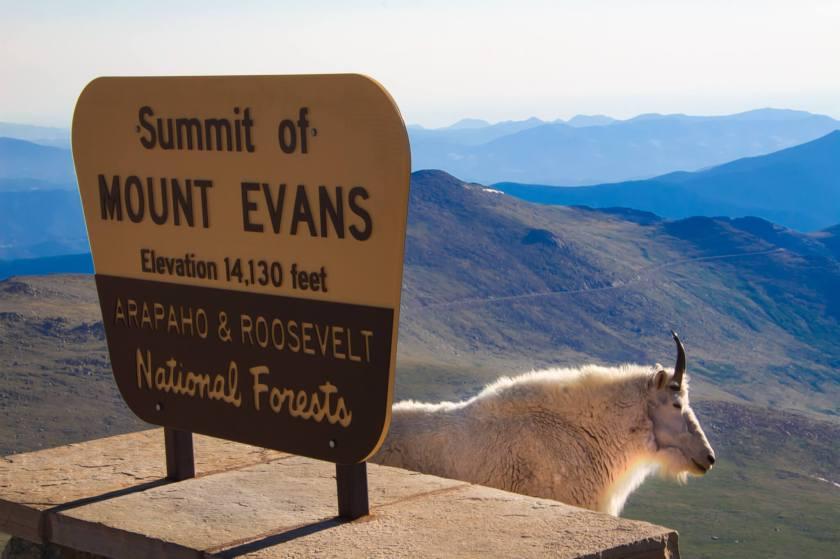 Curious Craig - Mt-Evans-Summit.jpeg