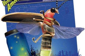 Indiana - Indiana-Fireflies-1.jpeg