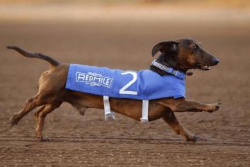 Kentucky - Wiener-Dog.png