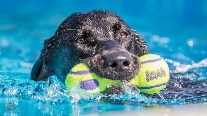 Murphy - Murphy-Dock-Dog.jpg