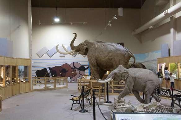 Curious Craig - Ice Age Exhibit