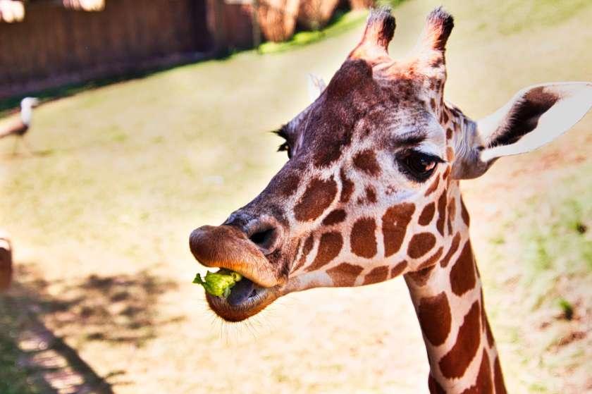 Curious Craig - Baby-Giraffe.jpeg