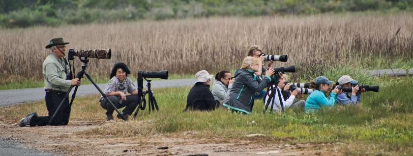 Curious Craig - Birdwatchers.jpeg