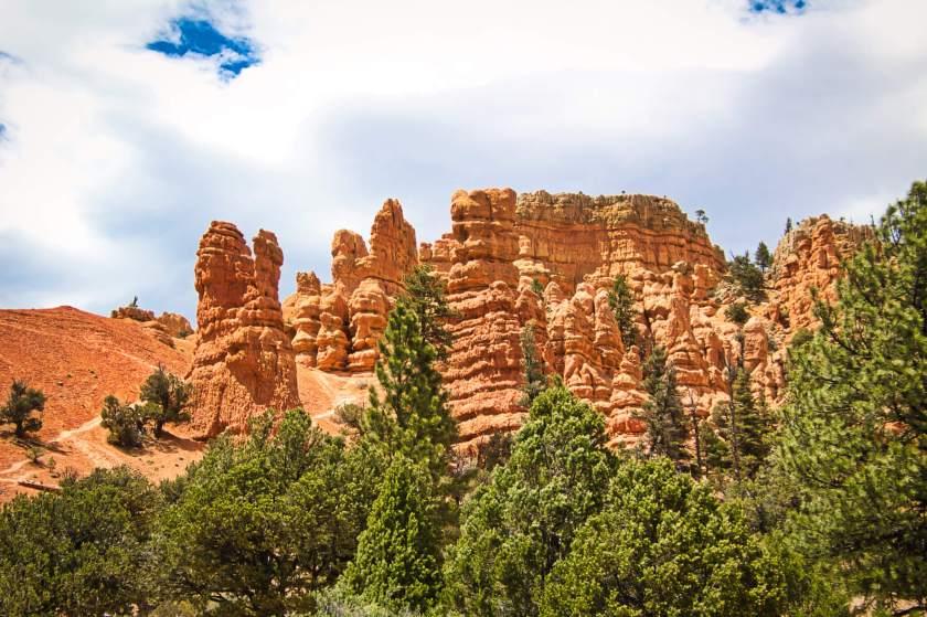 Curious Craig - Red-Canyon-Trees.jpeg