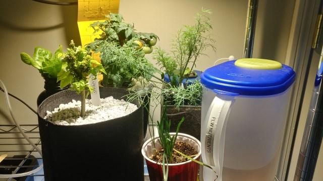 Plans in soil and Kratky in my indoor garden.