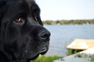 Always Contemplative