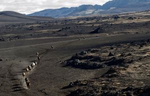 Horses being herded through the lava fields near Landmannalaugar in southern Iceland on September 21, 2011. Photo by: Lindsay Blatt / Herd In Iceland About the Project: In September and October of 2010, Lindsay Blatt and Paul Taggart were worked in Iceland on their short film and photographic project documenting the historic herding of the prized Iceland horses. Each year traditional herdsman take to the back country to round up thousands of the country's hardy horses, which have spent the summer grazing in the highlands. Throughout the three weeks of production Lindsay and Paul shot from land, air, foot, and hoof across the vast Icelandic landscape, following and living with the herdsmen. The team has brought together a collection of media for print publications, as well as a short documentary film. In September of 2011, the team returnedto conduct interviews for the film, and to produce a new selection of large format portraits to accompany the landscapes for future exhibitions.