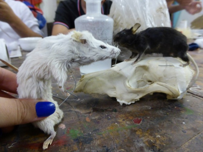 Taxidermy workshop Last Tuesday Society Tonja Grung review