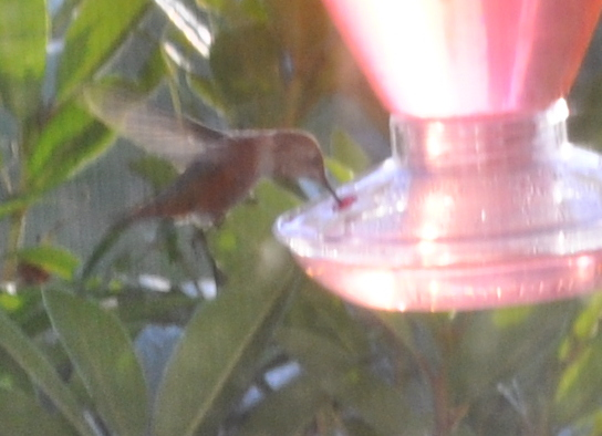 Hummingbird at front feeder.