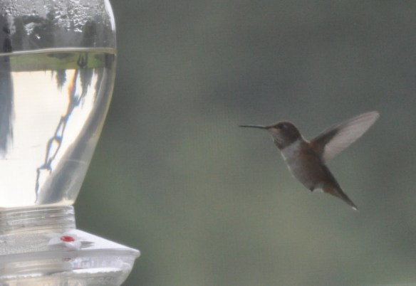 Hummingbird at the front feeder.