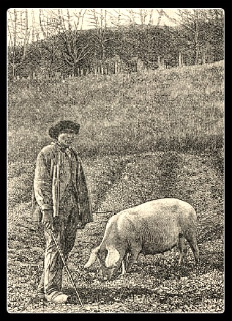 truffle hunter w pig