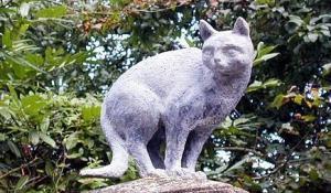 cats of la romieu