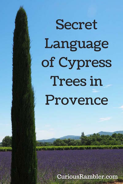 Secret Language of Cypress Trees in Provence 2