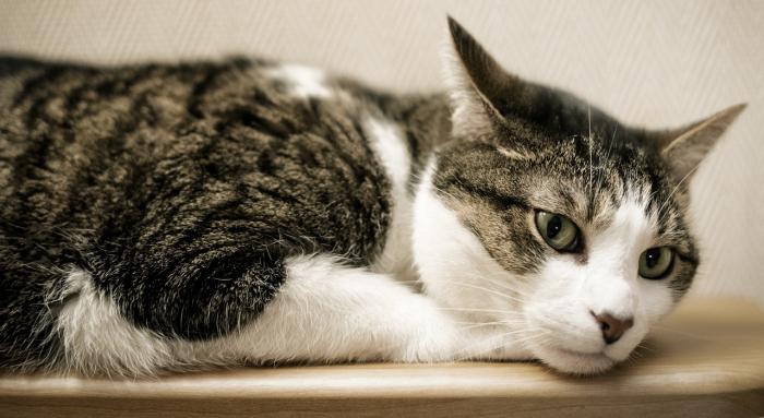 cat-1101995_1280