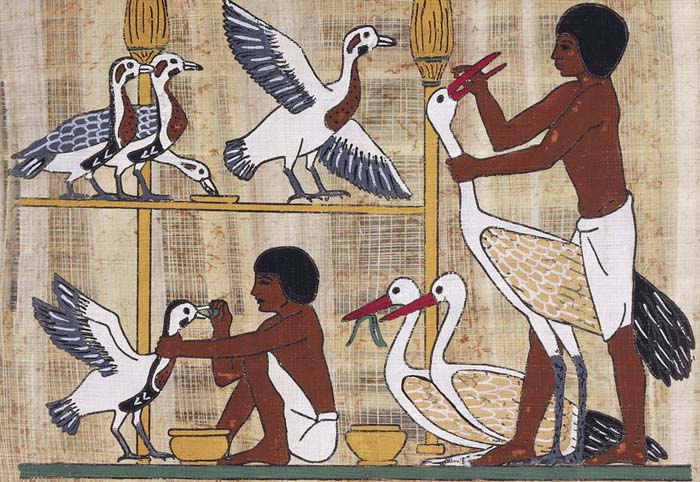 Papyrus depicting geese feeding, reconstruction relief from private funerary mastaba of Ptahhotep
