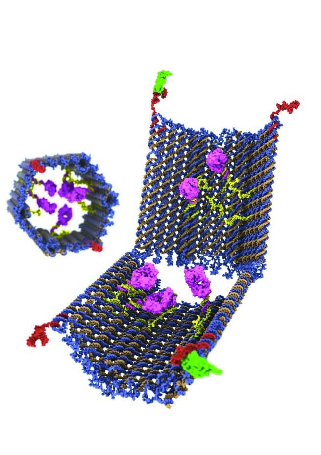 dna-nanorobot