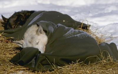 Inspirational (And Adorable) Photos Of Dogs Running The Alaskan Iditarod