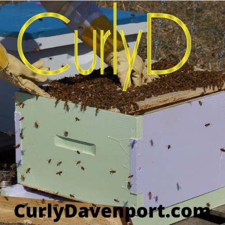 Curly-D-by-Curly-Davenport-organic-beeswax-Juteux