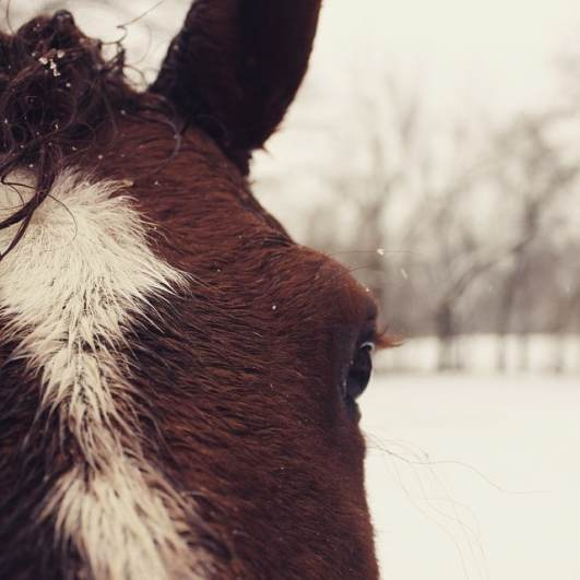 horse eyelashes in cold winter snow